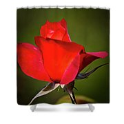 Hot Cocoa Rose Shower Curtain