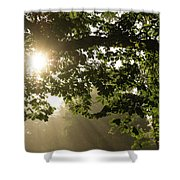 Hot Golden Mists Of Summer Shower Curtain