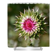 Hot Pink And Spikey Shower Curtain
