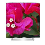 Hot Pink Bougainvillea Shower Curtain