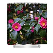 Hot Pink Camellias Glowing In The Shade Shower Curtain