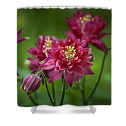 Hot Pink Columbine Shower Curtain