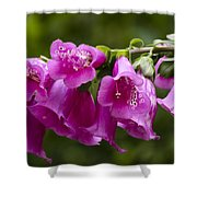 Hot Pink Foxglove Shower Curtain