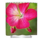 Hot Pink Geranium On A Brilliant Summer Day Shower Curtain