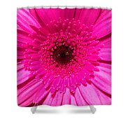 Hot Pink Gerbera Shower Curtain