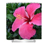 Hot Pink Hibiscus 1 Shower Curtain