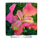 Hot Pink Iris Flower Shower Curtain