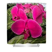Hot Pink Orchids Shower Curtain