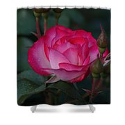 Hot Pink Rose Shower Curtain
