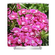 Hot Pink Sweet William Flowers In A Garden Blooming Shower Curtain