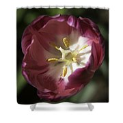 Hot Pink Tulip Center Squared Shower Curtain