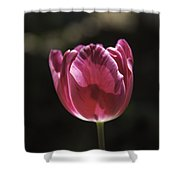 Hot Pink Tulip Squared 02 Shower Curtain