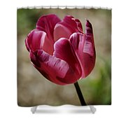 Hot Pink Tulip Squared Shower Curtain