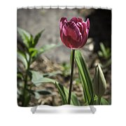 Hot Pink Tulip Shower Curtain