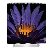 Hot Purple Water Lily Shower Curtain