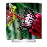 Hot Red Passion Shower Curtain