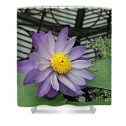 Hothouse Waterlily Shower Curtain