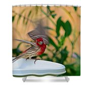 House Finch - 2 Shower Curtain