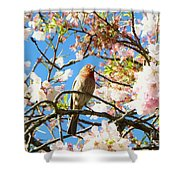 House Finch In The Cherry Blossoms Shower Curtain