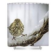 House Finch Snow Is Coming Shower Curtain by LeeAnn McLaneGoetz McLaneGoetzStudioLLCcom