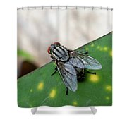 House Fly On Leaf Shower Curtain