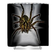 House Spider Shower Curtain