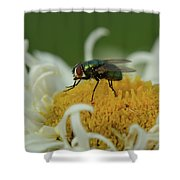 Housefly On Daisy Shower Curtain