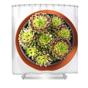 Houseleek Shower Curtain