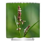 Hoverfly On Flower Shower Curtain