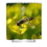 Hoverfly On Yellow Flower Shower Curtain