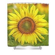 How Do You Dew, Sunflower Shower Curtain