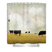 How Now Black Cow Shower Curtain