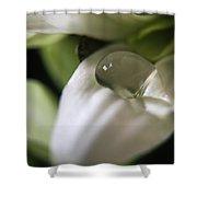How Still The Petal Shower Curtain