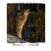 Howl In The Woods Shower Curtain