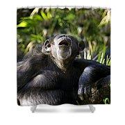 Howling Chimpanzee Shower Curtain