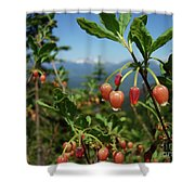 Huckleberry Flowers Atop Huckleberry Mountain In Glacier National Park Montana Shower Curtain
