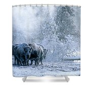 Huddled For Warmth Shower Curtain