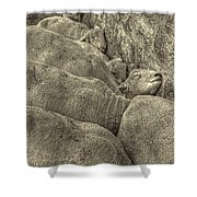 Huddled Yearling Rams Shower Curtain