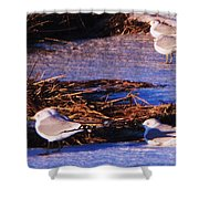Huddling On A Winter Day  Shower Curtain