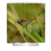 Hudsonian Whiteface Dragonfly Shower Curtain