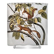 Hudsons Bay Squirrel Shower Curtain