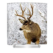 Huge Buck Deer In The Snowy Woods Shower Curtain
