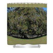 Huge Live Oak Fisheye Shower Curtain