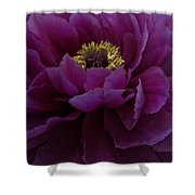 Huge Magenta Peony Shower Curtain