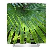 Huge Palm Leaf Shower Curtain