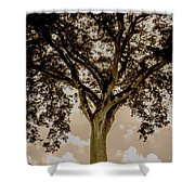 Huge Tree 11 Shower Curtain