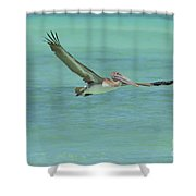 Huge Wing Span On A Pelican In Flight Shower Curtain