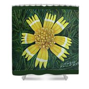 Huisache Daisy Shower Curtain