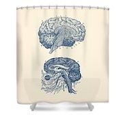 Human Brain - Central Nervous System - Vintage Anatomy Print Shower Curtain
