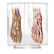 Human Foot Anatomy Showing Skin, Veins Shower Curtain